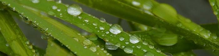 raindrops.jpg - 23.84 kB